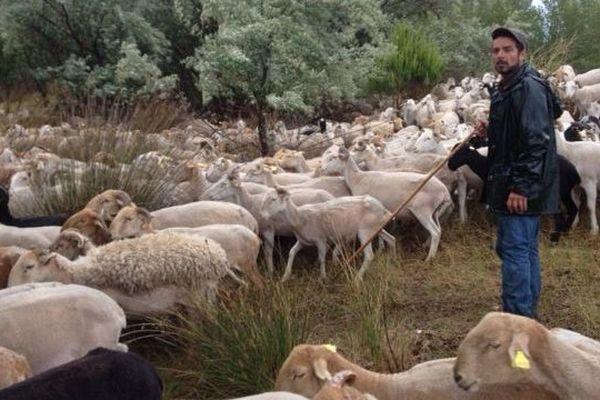 Le berger veille sur un troupeau d'un millier de bêtes