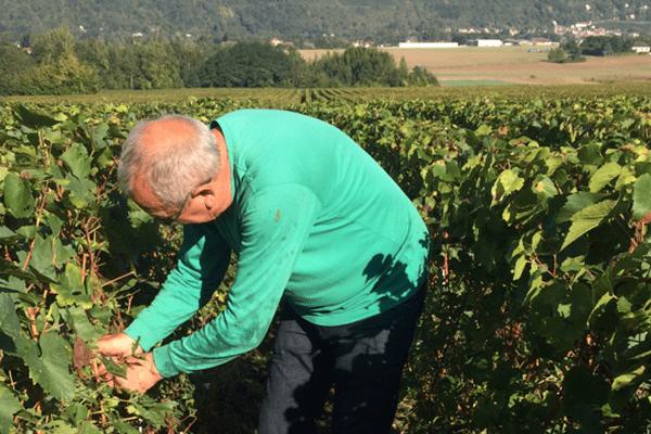Dans les vignes de champagne, en Seine-et-Marne.
