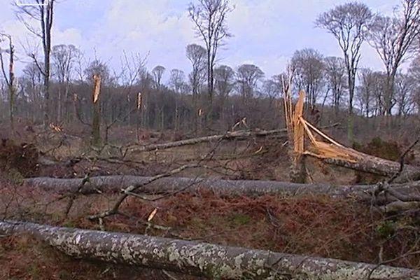 Les forêts bretonnes et principalement celle de Fougères ont payé un lourd tribu lors de la tempête de 1999