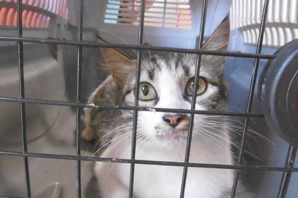 L'un des chats récupérés par la SPA