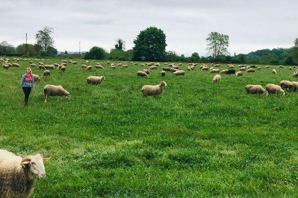 Les brebis de Marie-Claire Hondagneu monteront en estives dans deux mois vers La Pierre-Saint-Martin