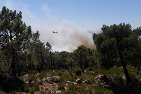Quatre Canadairs et un avion Dash sont engagés sur le feu de forêt de Fabrezan dans l'Aude