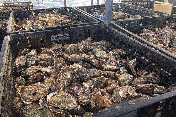 Avec la fermeture des restaurants, les ostréiculteurs de Marennes-Oléron ne peuvent pas écouler tous leurs stocks.