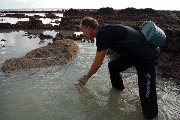 Pêche à pied dans les rochers de Veulettes-sur-Mer (Seine-Maritime) - Archives