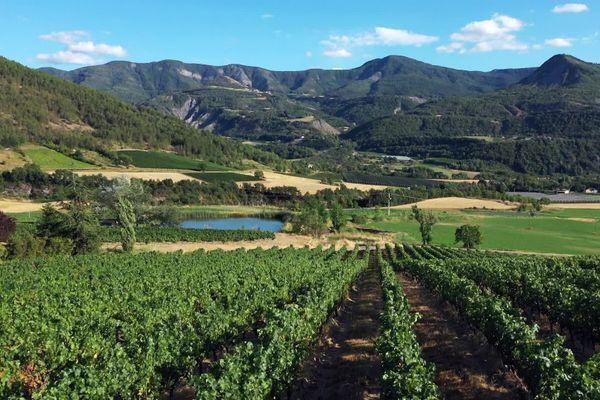 Ici les vignes sont parmi les plus hautes d'Europe, certaines culminent à 1 000 mètres d'altitude.