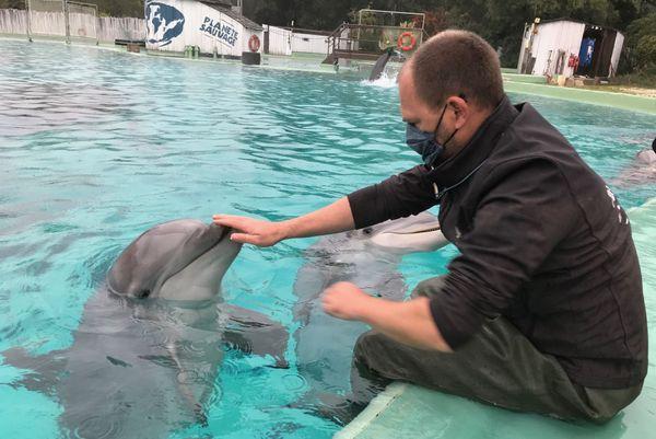 Planète Sauvage est un des trois parcs animaliers en France à accueillir des dauphins