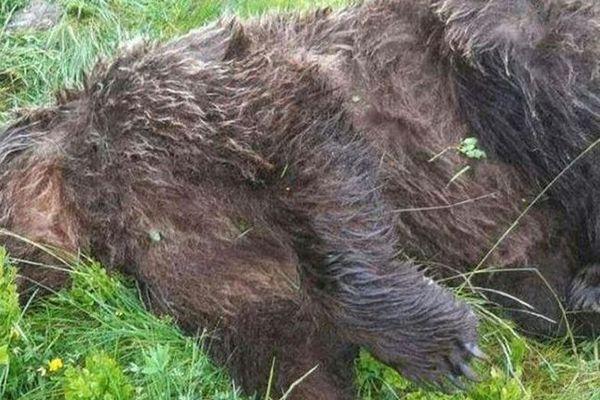 L'ours a été tué par balles, le 9 juin, sur la commune d'Ustou, en Ariège