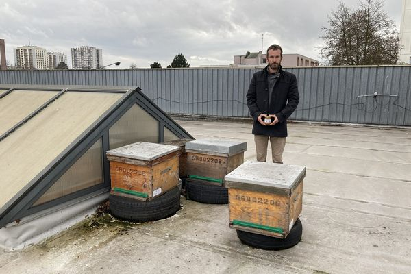 À Lorient, BeeCause a installé trois ruches sur le toit d'un Intermarché dans le quartier de Lanveur.