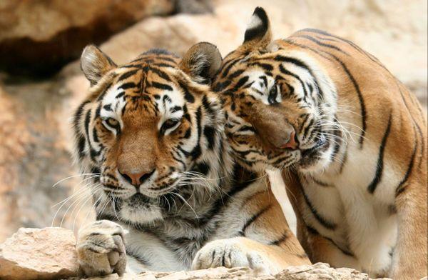 Les frères Pavlov et Pouchkine, âgés de 18 ans, anciens pensionnaires du zoo de la Barben.