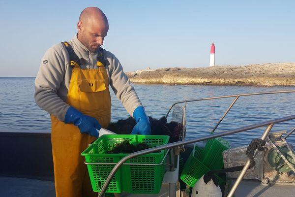 Les pêcheurs constatent une diminution du nombre d'oursins.