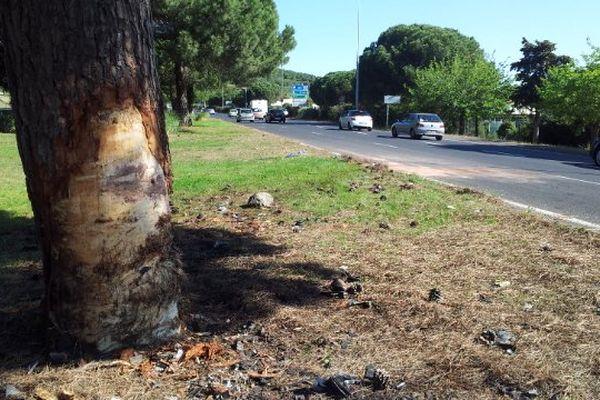Entre Agde et le cap d'Agde, les deux véhicules ont percuté cet arbre