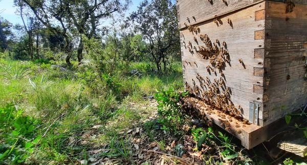 moins de mortalité sèche pour les abeilles cette année.