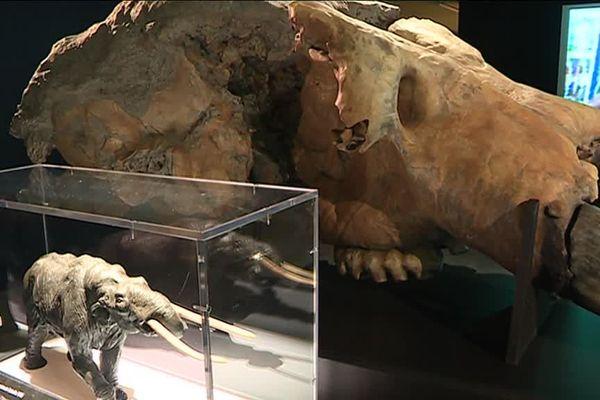 Le crâne d'un proboscidien