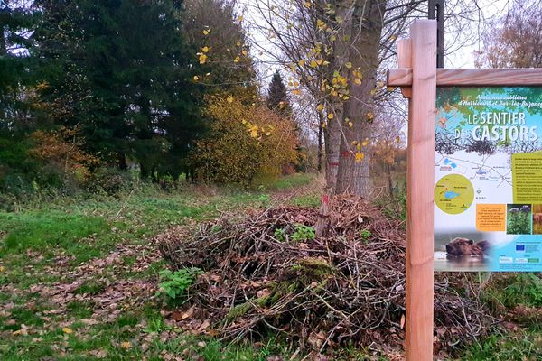 Le sentier des castors à Harricourt, dans les Ardennes.