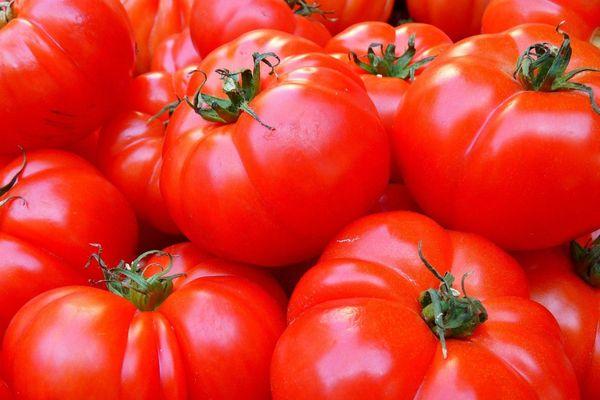 """40 000 plants de tomates sous serre ont remplacé 25 hectares de nature (zone humide et forêt). Un modèle agricole industriel qui se veut """"respectueux de l'environnement"""" mais qui reste encore fortement contesté."""