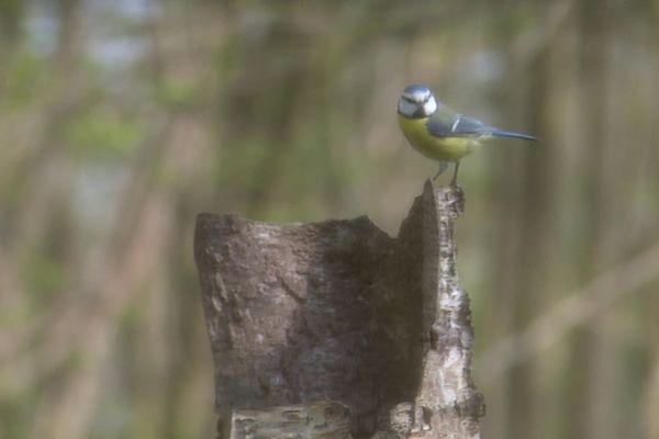 Le festival de l'oiseau et de la nature jusqu'au 2 mai