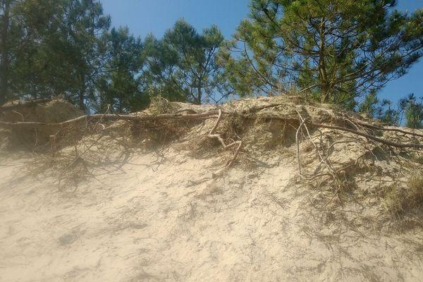 On voit bien ici l'érosion de la dune sur la plage du Galon d'Or (La Tremblade - La Rochelle)