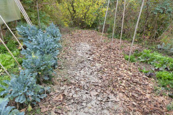 Les feuilles servent de couche de protection à votre potager pour passer l'hiver.