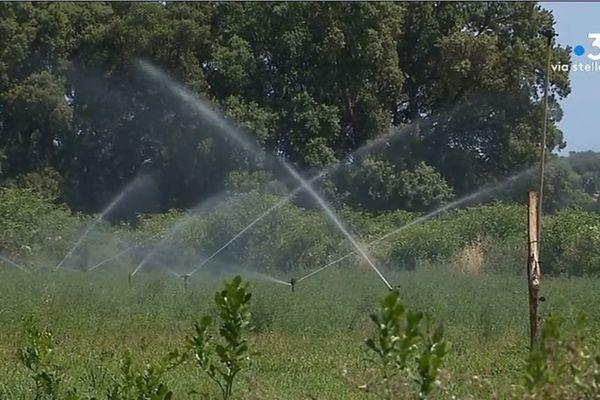 Le comité sécheresse s'est réunit vendredi 12 juillet à San-Giuliano pour faire le point sur les réserves en eau de l'île.