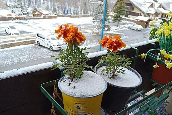 """""""La fille de mon amie m'a même apporté les fleurs commandées afin que je mette de la couleur sur mon balcon"""""""