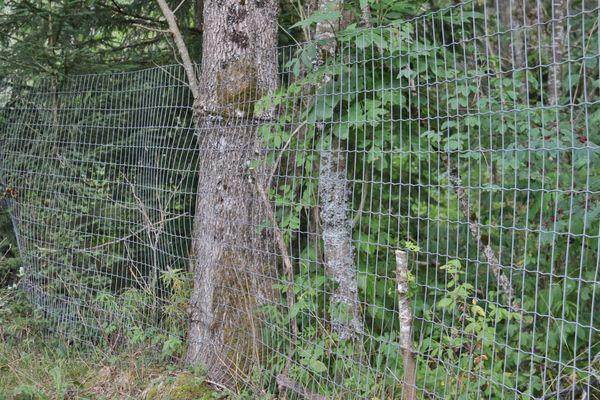 Plus de 5 km encerclaient encore l'ancienne Vallée des rennes, à Prémanon dans le Jura. Grâce à Christophe Clément, il n'y a plus que 3 km environ, et bientôt quasiment plus aucun, après une opération les 29 et 30 mai 2021