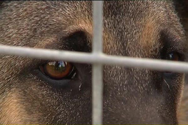 La SPA organise un week-end portes ouvertes pour favoriser l'adoption des animaux dans ses refuges