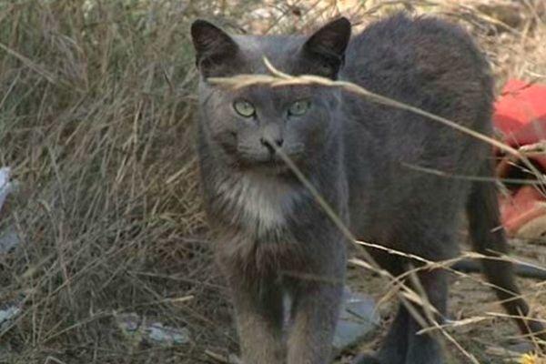 """Béziers (Hérault) - les bénévoles de l'association """"chats libres de Béziers"""" tentent de sauver les animaux - 4 septembre 2013."""