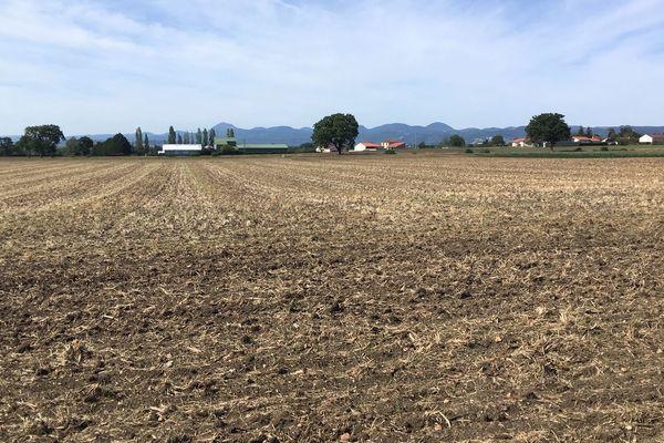 Bilan amère pour les céréaliers d'Auvergne. Contrairement au reste de la France, la récolte 2019 est en baisse.