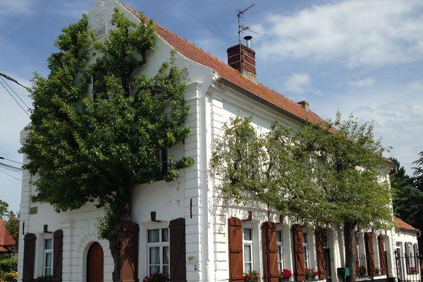 Recques-sur-Hem : 2 poiriers de la façade d'une maison labellisés «Arbres remarquables»