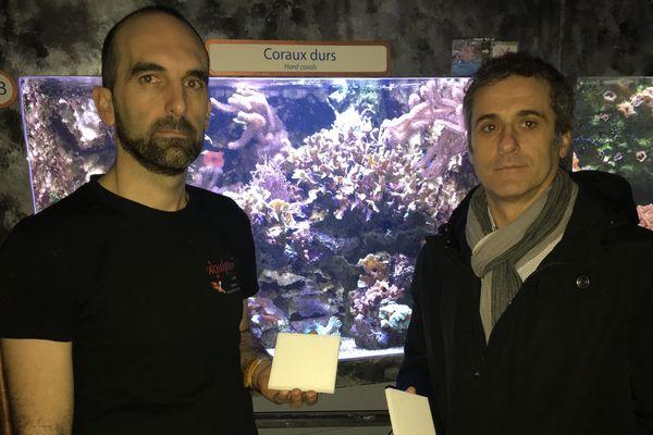 David Brathome, directeur de l'aquarium de Limoges, et Éric Denes, directeur scientifique d'I.Céram, avec les plaques de céramique qui serviront de test pour la fixation du corail.