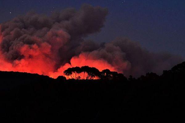 Près de 500 millions d'animaux auraient péri depuis le début de ces incendies.