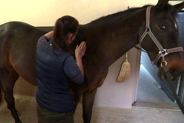 Camille Cassonneau, masseur équin