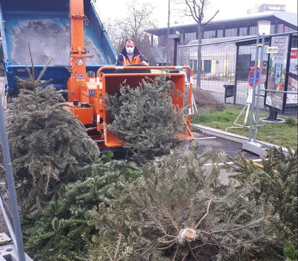 The municipal employees of the City of Colmar regularly collect the trees deposited by the inhabitants in three enclosures provided for this purpose.