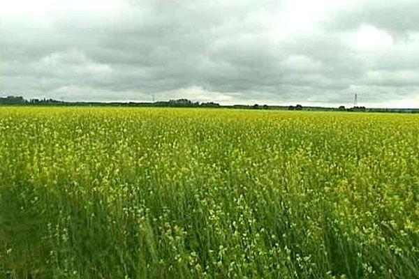 Les reconversions de grandes cultures céréalières sont les plus nombreuses pour la première fois en 2012