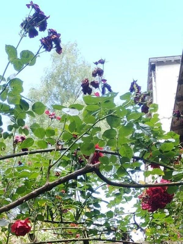 La Gacilly, village fleuri.