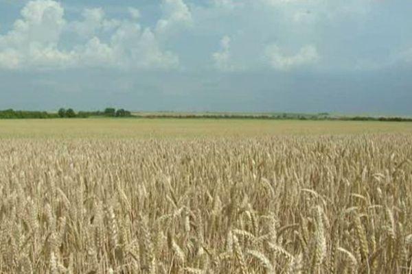 Mauvaise année pour les agriculteurs des Bas champs
