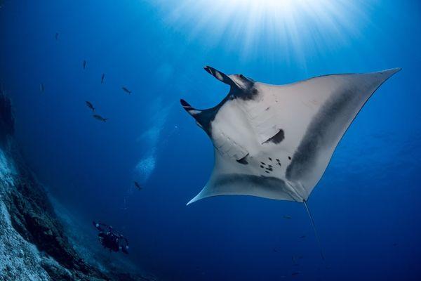 Rencontrer des passionnés de l'océan et partager un moment inoubliable avec eux, c'est ce que propose cette vente aux enchères dont les bénéfices iront à la recherche scientifique sous-marine.