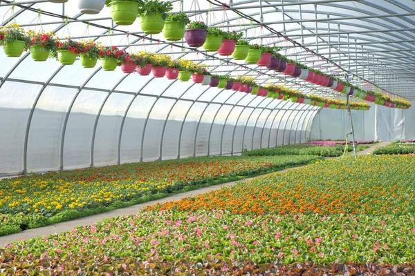 Plutôt que de détruire tout son stock de fleurs invendues, un horticulteur lyonnais fait don de 1 350 fleurs, essentiellement des orchidées, aux personnels hospitaliers lyonnais.