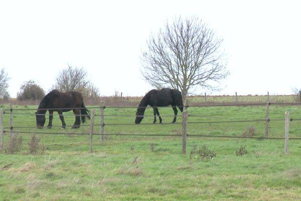 Avec paddocks.fr, professionnels du monde du cheval et particuliers sont mis en relation plus facilement.