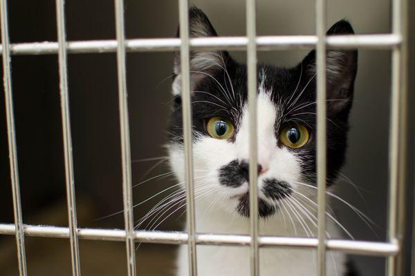 Vous voulez adopter un chat, pensez SPA !