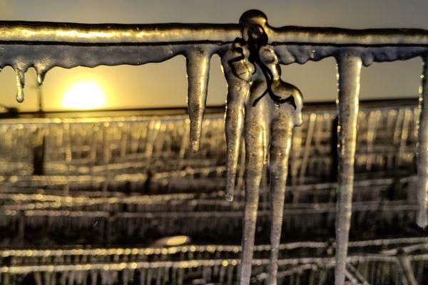 La beauté du gel dans les vignes de champagne à Celles-sur-Ource.