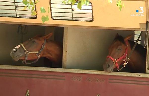Les chevaux sont au centre de toutes les attentions, à quelques minutes du départ de la première course