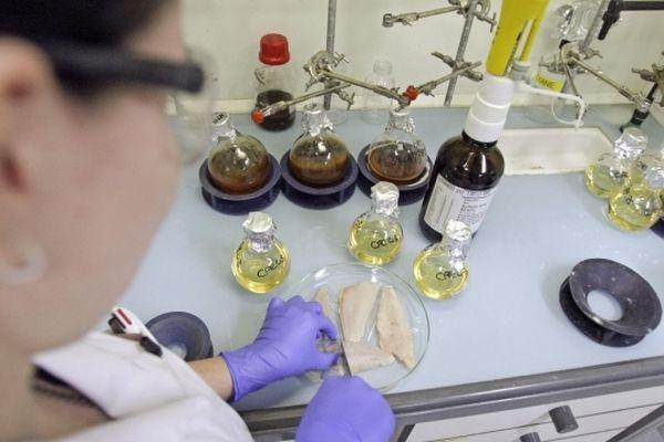 Des analyses sur du poisson pour détecter une pollution aux PCB.