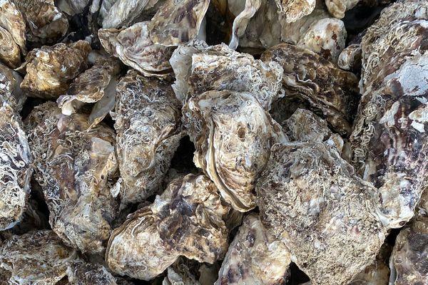 L'étang de Diana est un des deux seuls lieux de production d'huîtres en Corse.