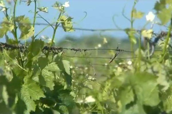 Ciel gris sur les vins de Bordeaux, plus d'un million d'hectolitres n'ont pas réussi à être écoulés sur les douze derniers mois