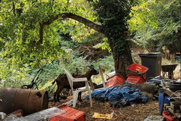 Les animaux erraient au milieu des poubelles et du désordre du Domaine des Mille Papattes.