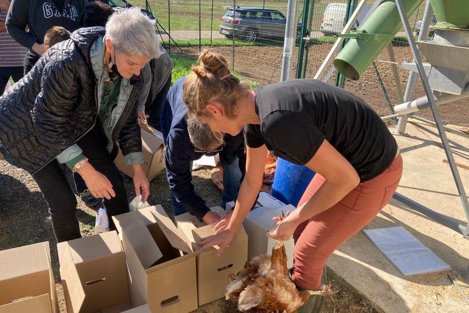 Essonne : une ferme vend ses poules à des particuliers pour leur éviter l'abattoir