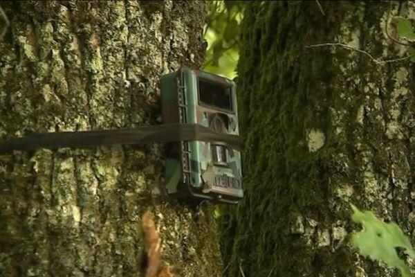 4 caméras ont été installées en périgord vert, là où plusieurs veaux ont été dévorés. Elles permettront de déceler la présence ou non d'un loup dans les environs.