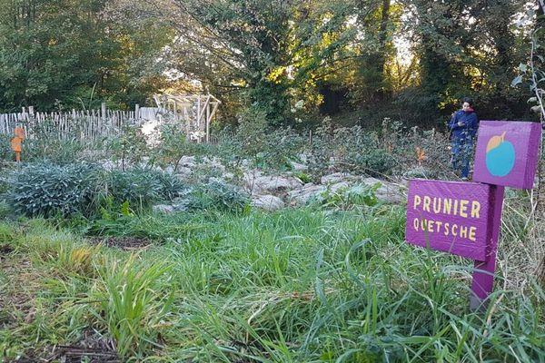 Le jardin publique comestible du fort de Tourneville a été crée en 2017
