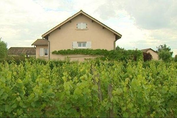 Certaines habitations sont très proches des vignes
